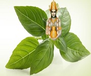 DMMAMYavatmal